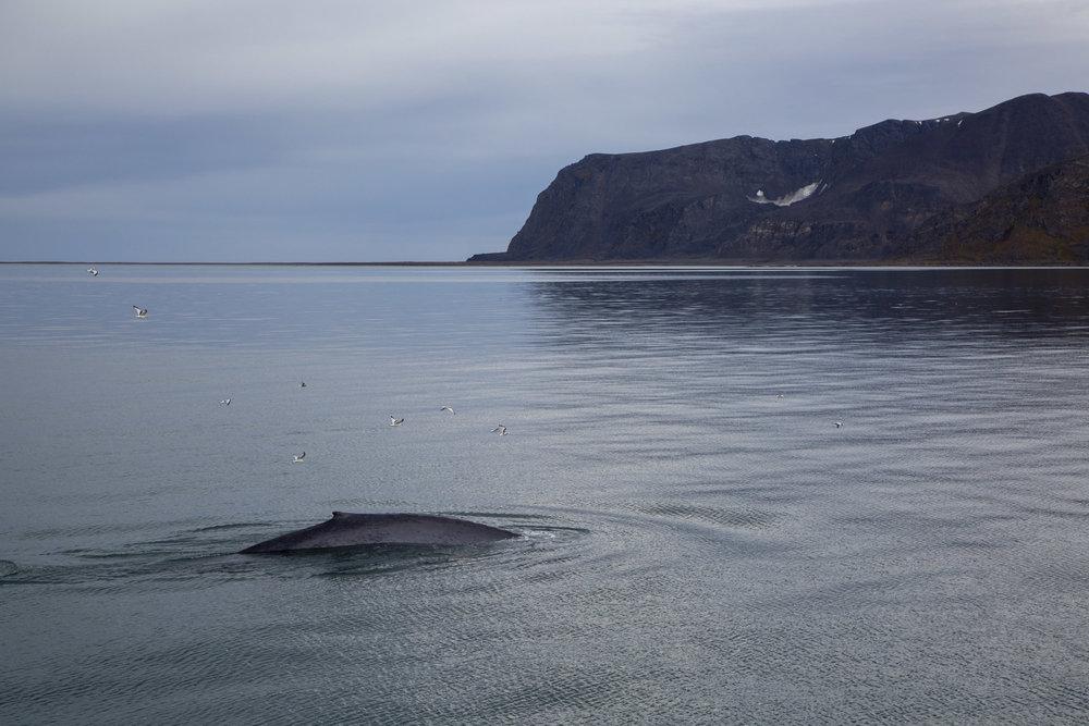 SPR_Svalbard-53.jpg