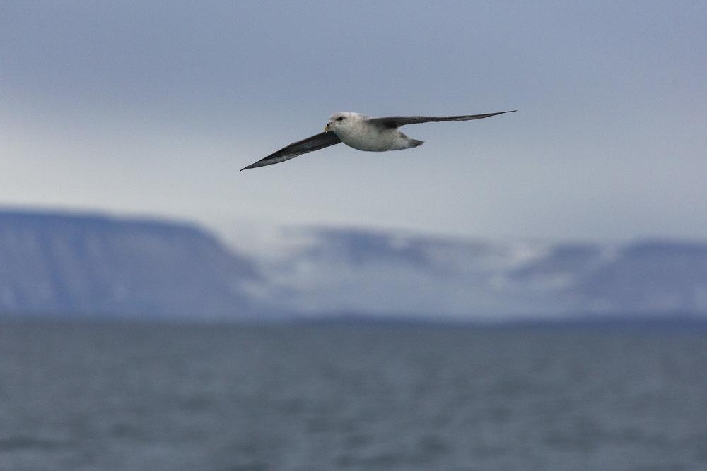 SPR_Svalbard-55.jpg
