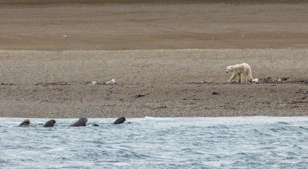 SPR_Svalbard-60.jpg