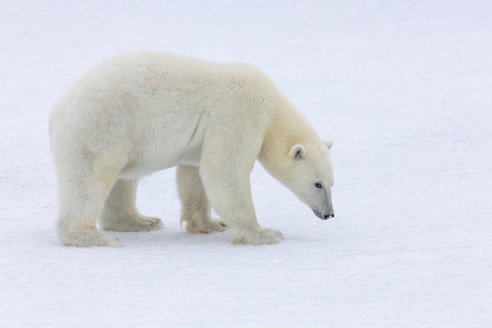 SPR_Svalbard-64.jpg