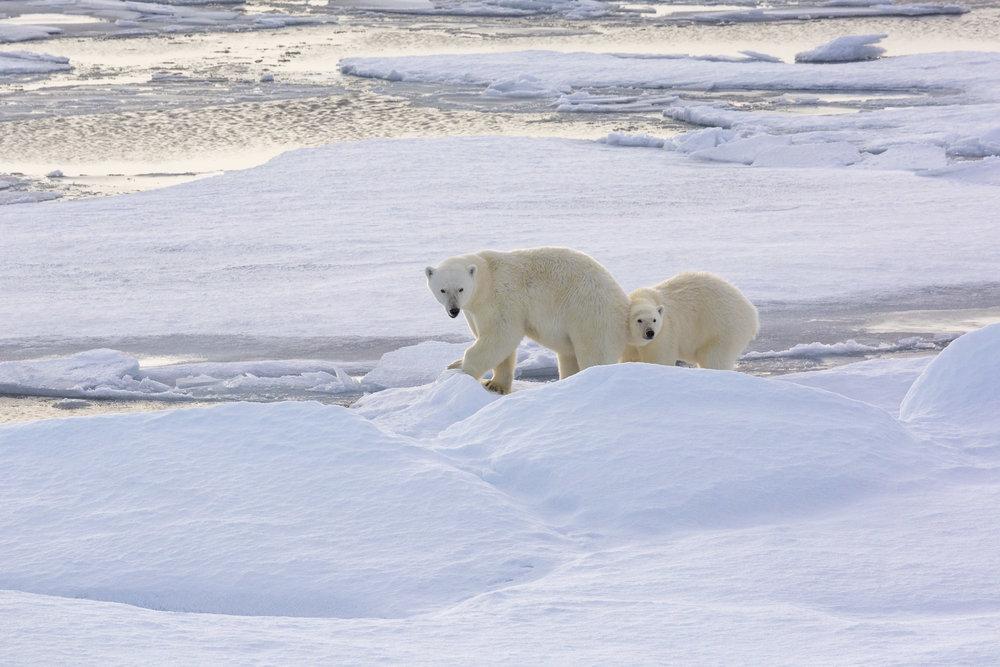 SPR_Svalbard-66.jpg