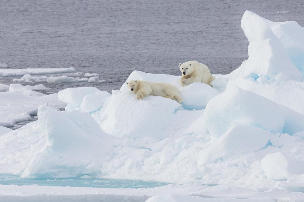SPR_Svalbard-69.jpg