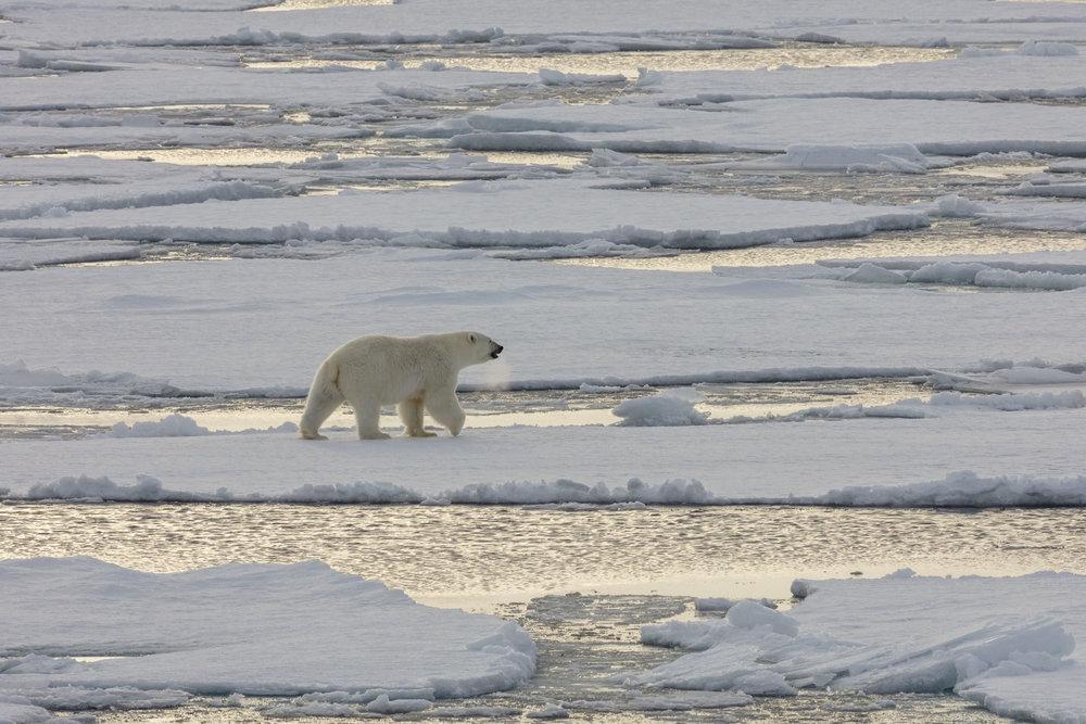 SPR_Svalbard-70.jpg