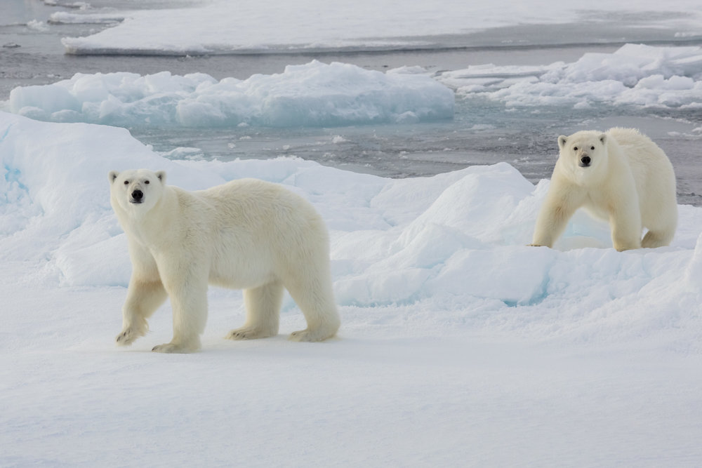 SPR_Svalbard-72.jpg
