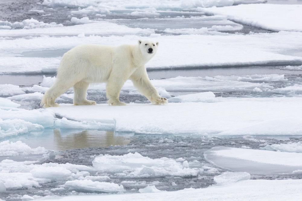 SPR_Svalbard-75.jpg