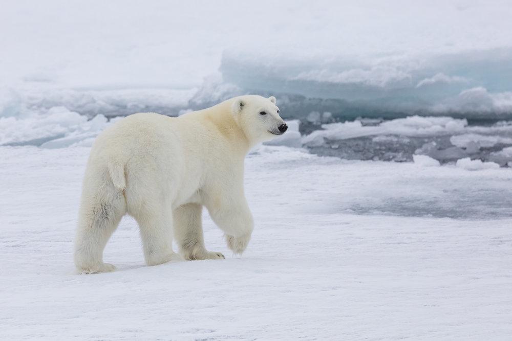 SPR_Svalbard-76.jpg