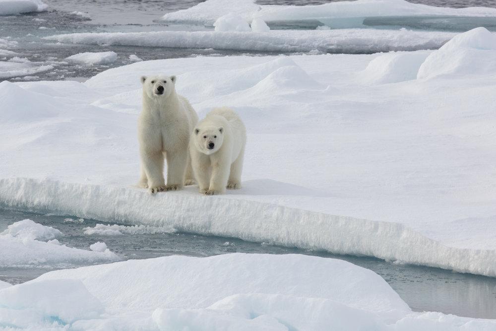 SPR_Svalbard-78.jpg