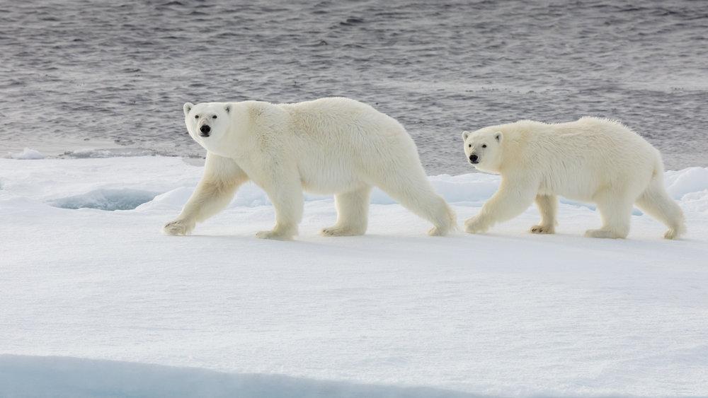 SPR_Svalbard-81.jpg