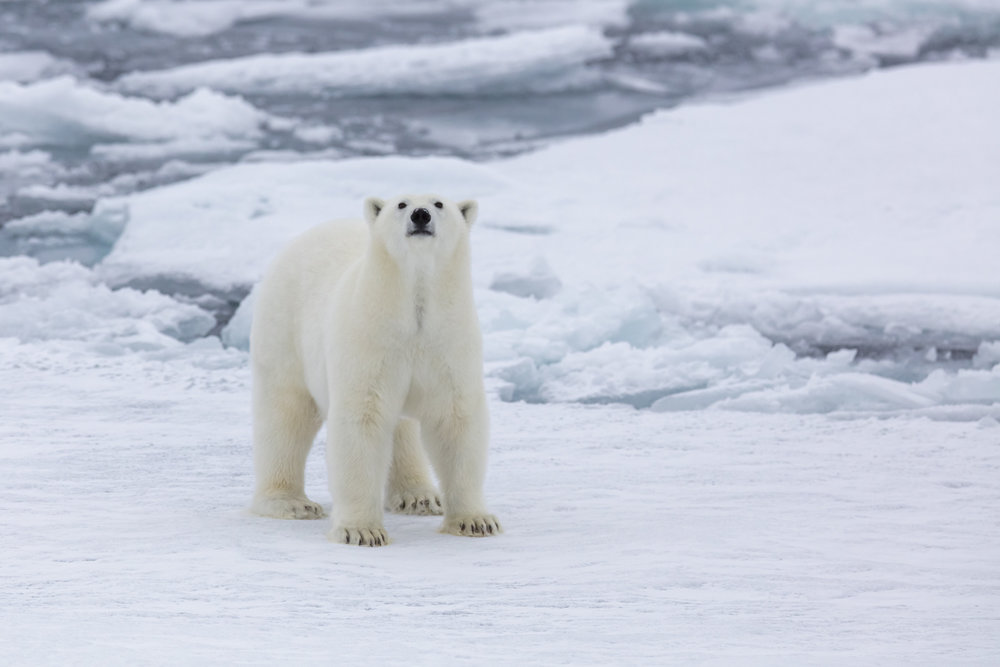 SPR_Svalbard-87.jpg