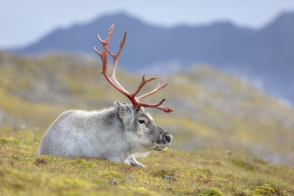 SPR_Svalbard-88.jpg