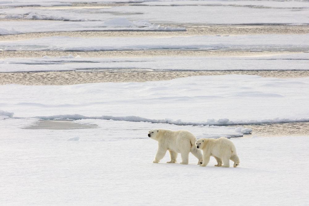 SPR_Svalbard-90.jpg