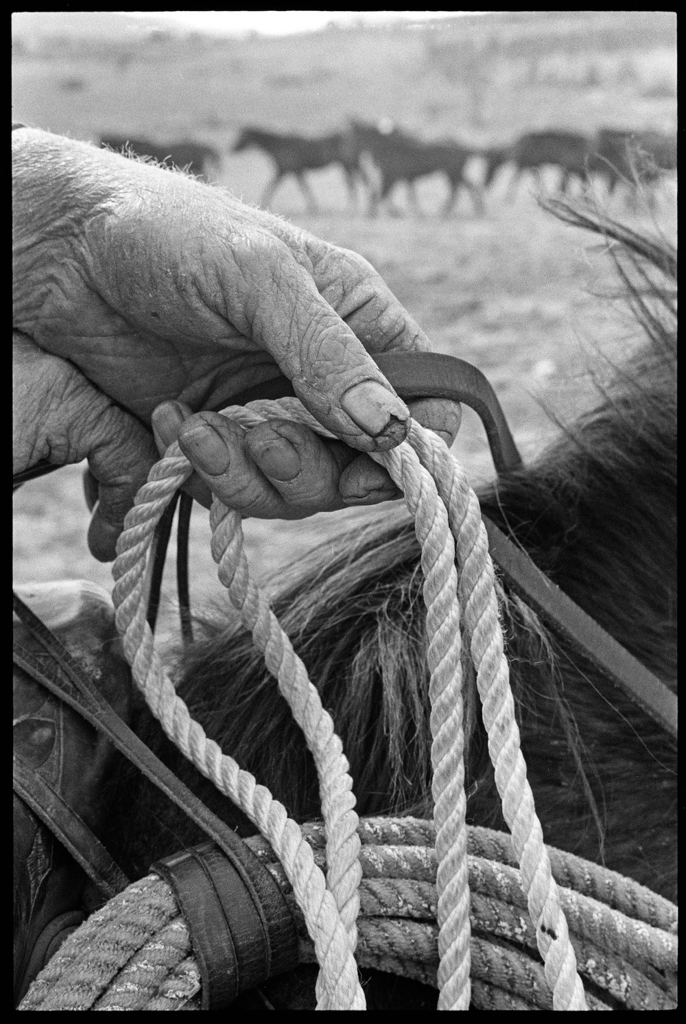 1970 RANCH FOREMAN'S HAND, near Prescott, Arizona.