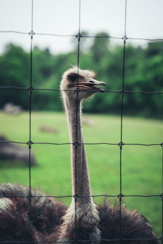 Brews At Zoo