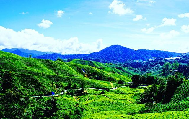 Malaysia's Cameron Highlands: green, lush, and a great place for a cup of tea ☕ . . . #overthemaptravel #travel #travelblogging #travelgram #wanderlust #explore #adventure #instagood #igers #malaysiatrulyasia #malaysia #sky #clouds #nature . . . #sonyimages #yourshotphotographer #iamatraveler #travelislifee #travelandlife #bestplacestogo #passionpassport #bestintravel #bbctravel #lovetheworld #gothere #inspirationaldestinations #rgphoto