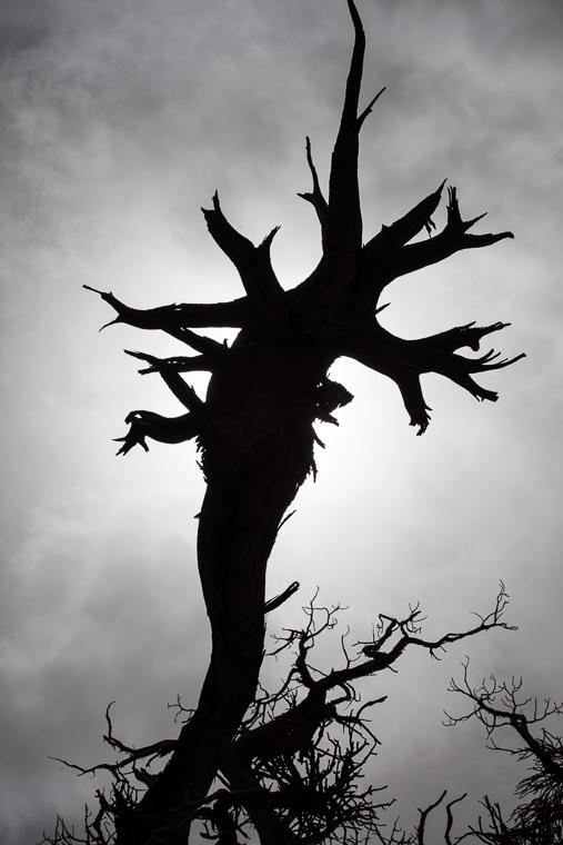 Tree on Wildrose Peak in Death Valley National Park