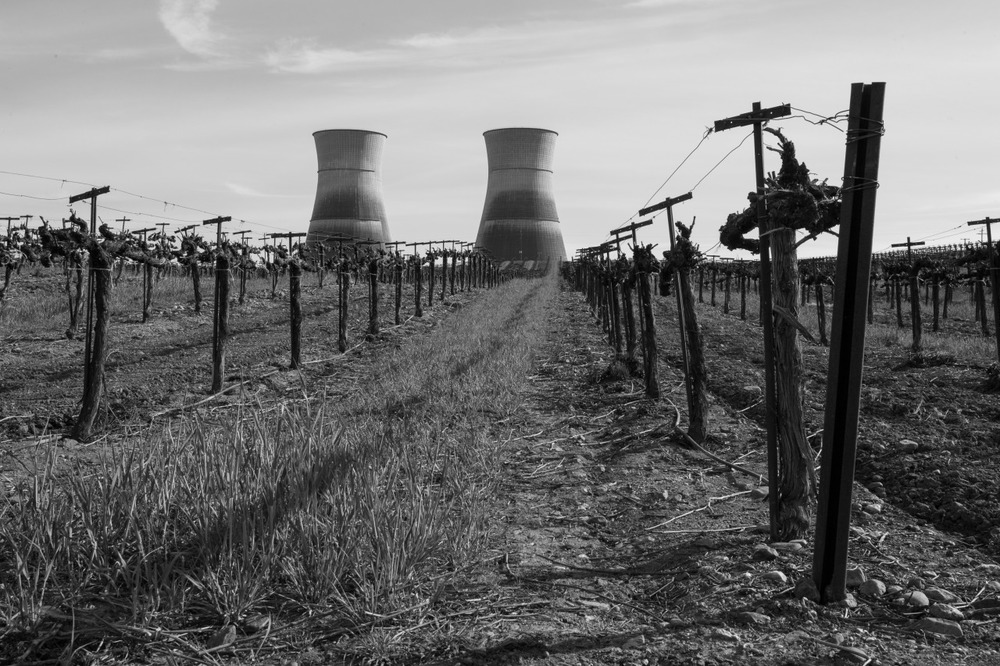 A vineyard planted right next to a nuclear power plant in Northern California