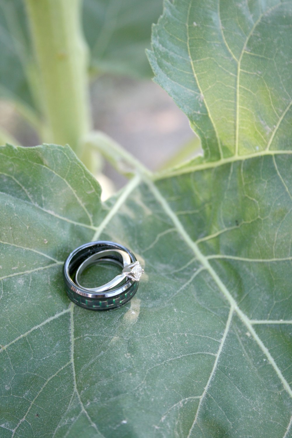 wedding rings on sunflower leaf.jpg