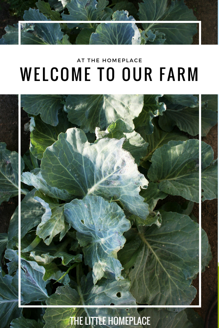 At the Homeplace - Welcome to Our Farm.png