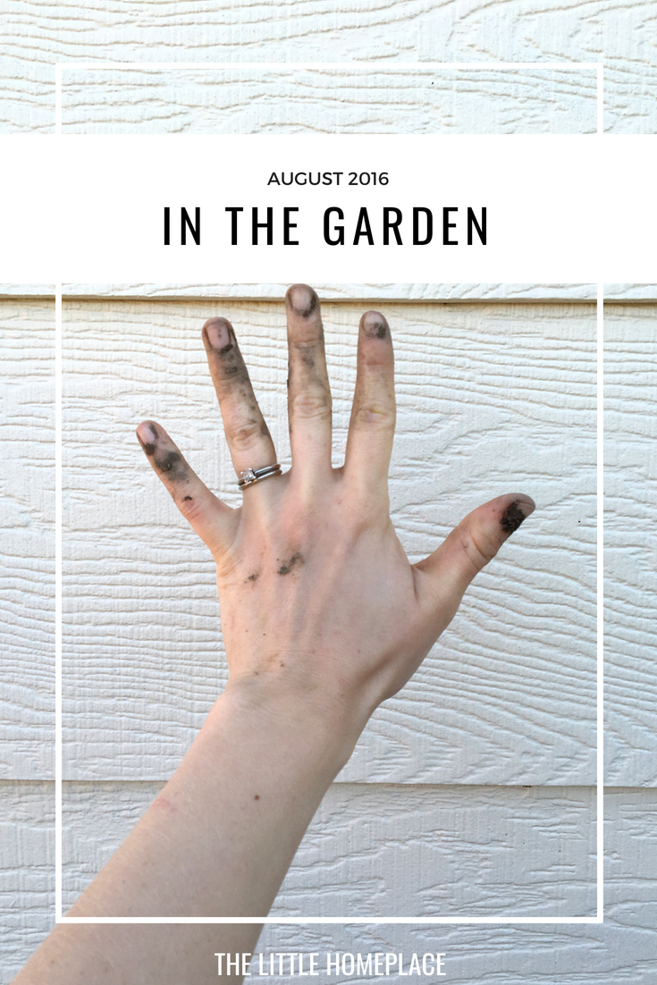 In The Garden August 2016 | The Little Homeplace