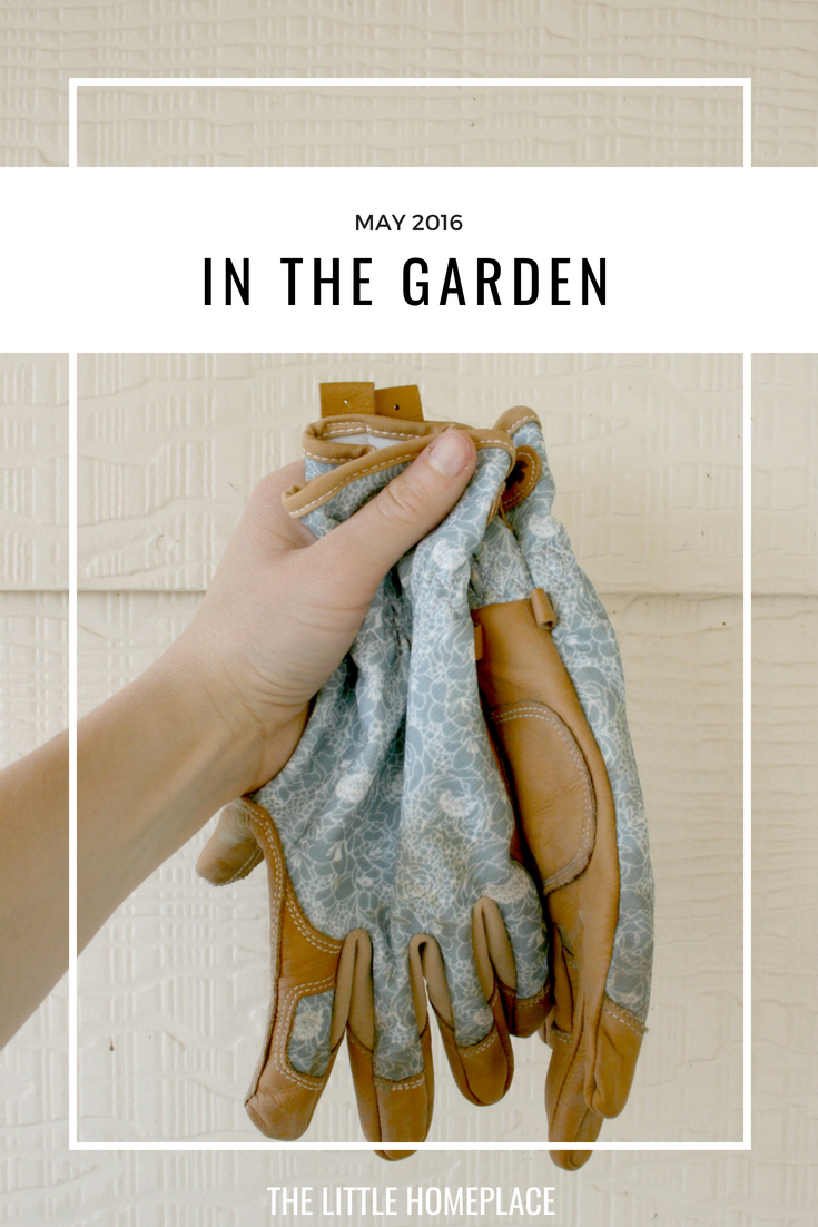 In the Garden May 2016 | The Little Homeplace