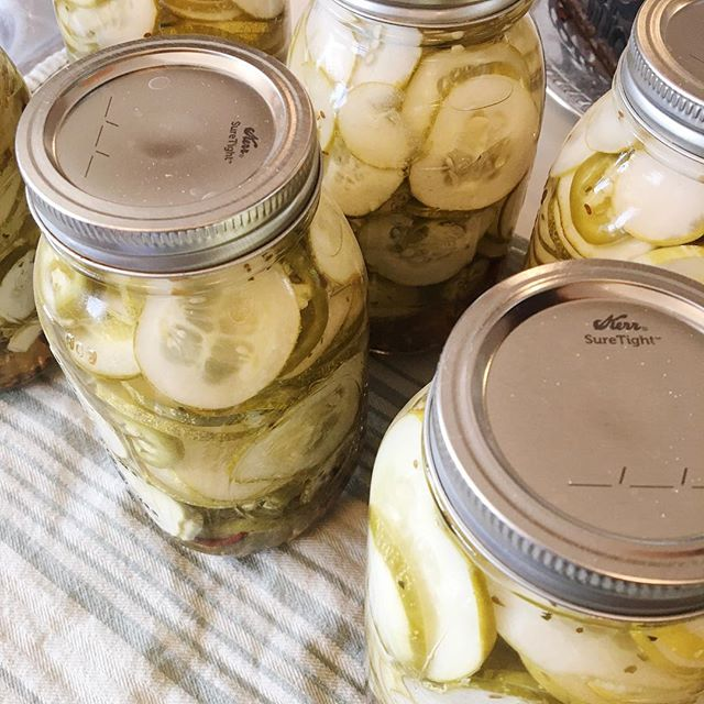I have canned 18 quarts of pickles in the last few weeks. 18!! That's way more than just the two of us could ever eat, so it's a good thing I have friends that like pickles too. 😂⠀ My garden has been good to me this year! It's been a lot of hard work, as always, (and it's not done yet!) but I am so thankful for such a productive season. I had the best beet crop yet, the lettuce lasted longer than usual, the squash and cucumbers made SO many babies, and the tomatoes are finishing the season strong. I always enjoy these garden fresh goodies during the dark winter days, but this year I know I will all the more, especially with little babe coming. ☺️ ⠀ How are you finishing off your summer, friend? ⠀ .⠀ .⠀ .⠀ .⠀ .⠀ .⠀ .⠀ .⠀ .⠀ .⠀ .⠀ .⠀ #canning #canningseason #homemadepickles #homegrownveggies #homegrownfood #gardenfresh #simplicity #thesimplelife #simpleliving #livesimply #seekingsimplicity #liveslow #slowliving #naturalliving #naturalhome #purposefulliving #purposefullife  #homemaker #homemaking #proverbs31woman #countrylife #countryliving #homesteading #homesteadlife #growyourownfood