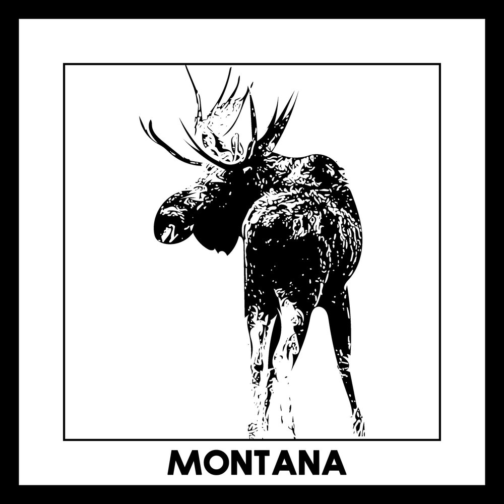 Fun fact: there are over 5,000 moose in Montana!