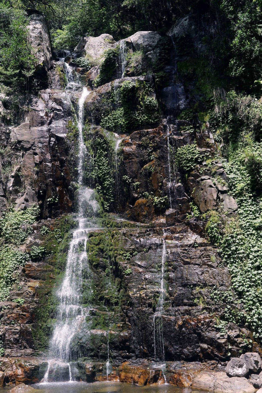 lyrebird falls