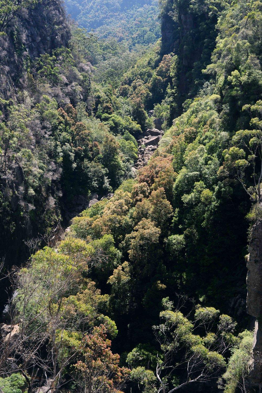 kangaroo valley carrington