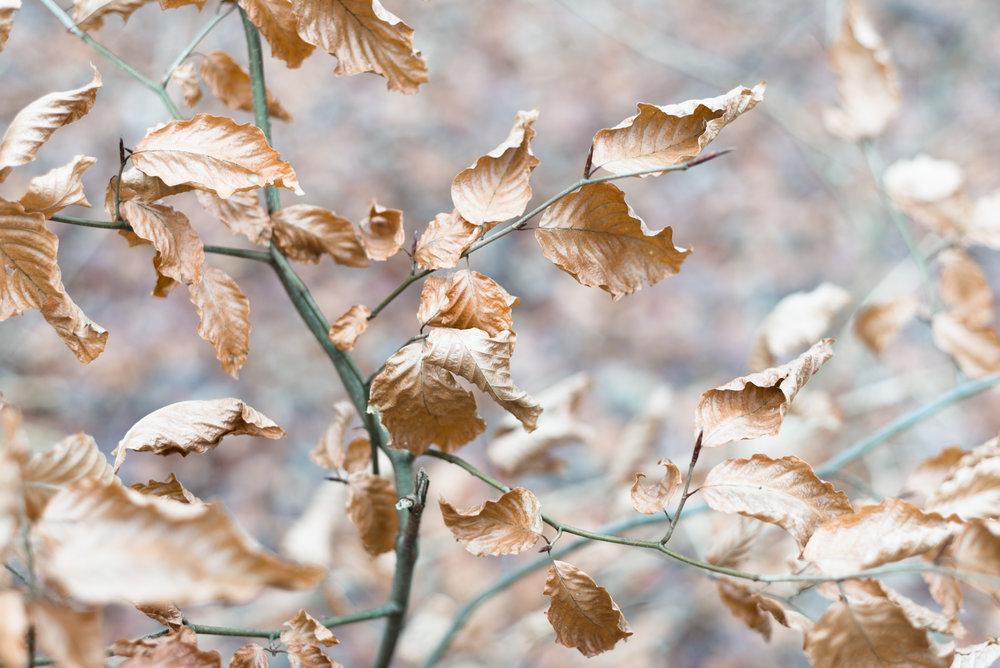 amsterdamse bos leaves