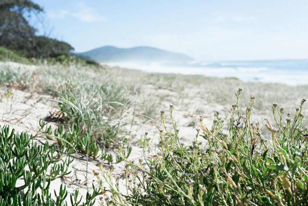seven mile beach forster.jpg