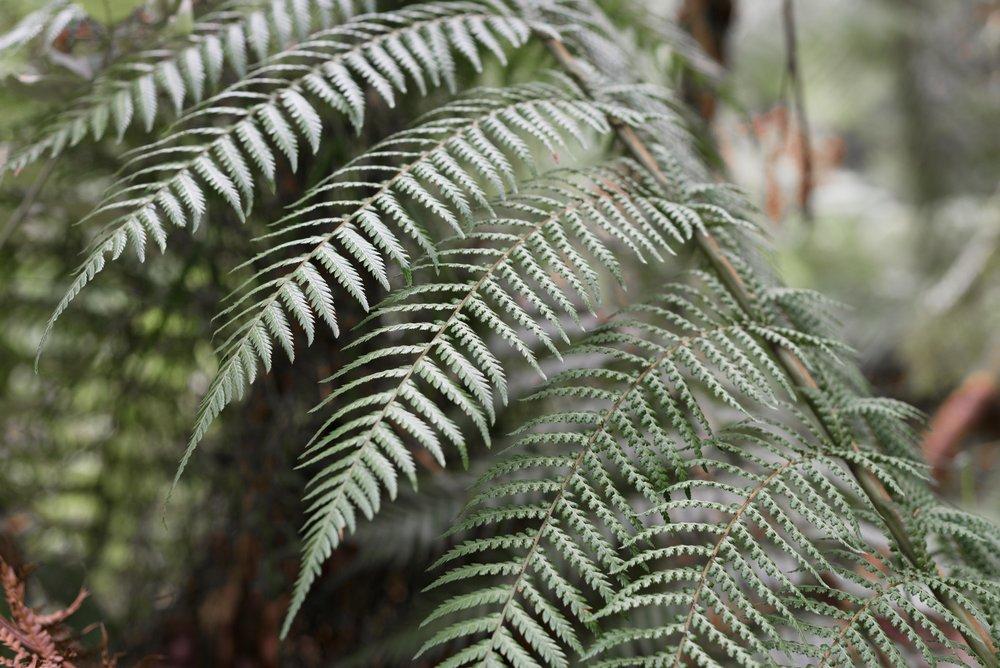 otways ferns maits rest