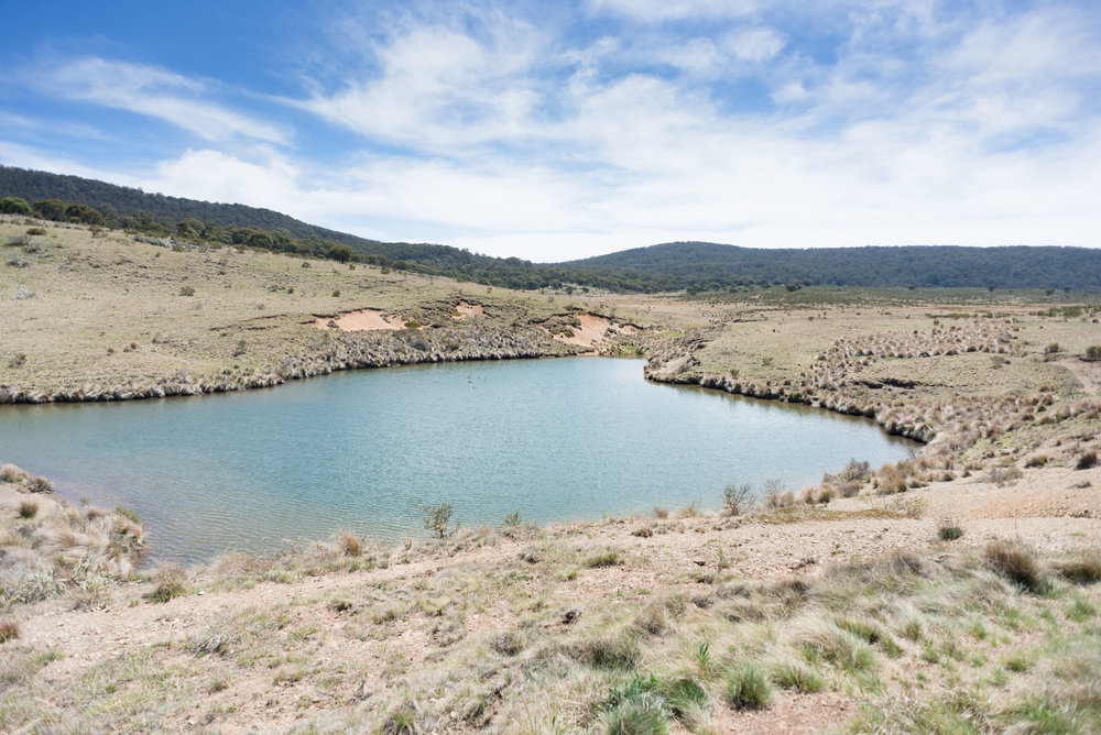 high plains watering hole nsw