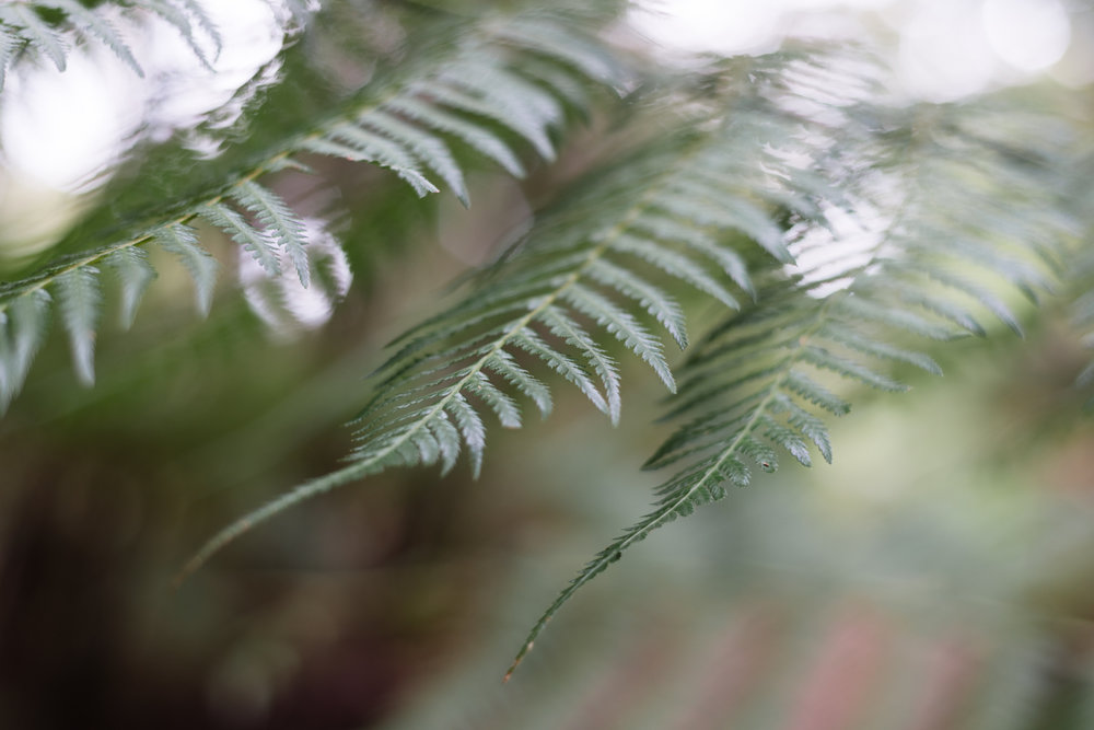 rainforest ferns on mount gulaga