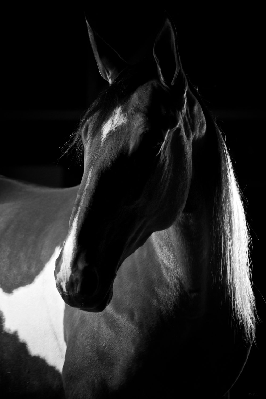 DH_SquareSpace_equus-234_161019.jpg