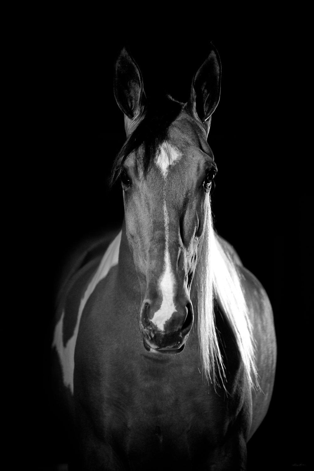 DH_SquareSpace_equus-307_161019.jpg