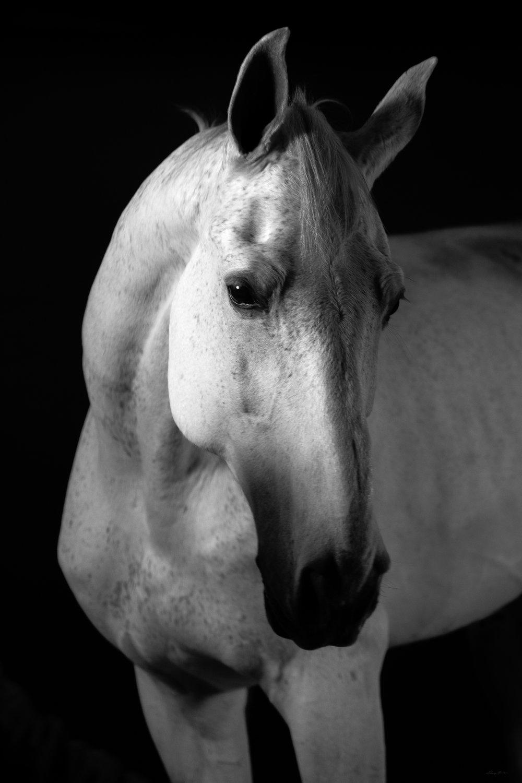 DH_SquareSpace_equus-0809_180110.jpg