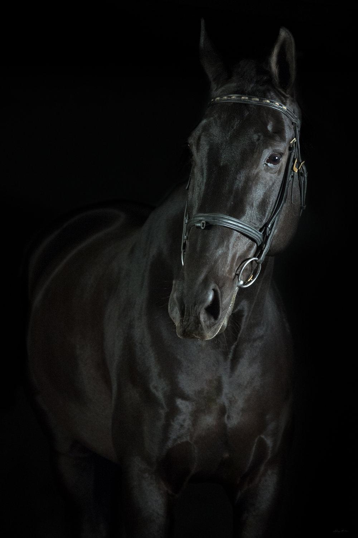 DH_SquareSpace_equus-1239_180110.jpg