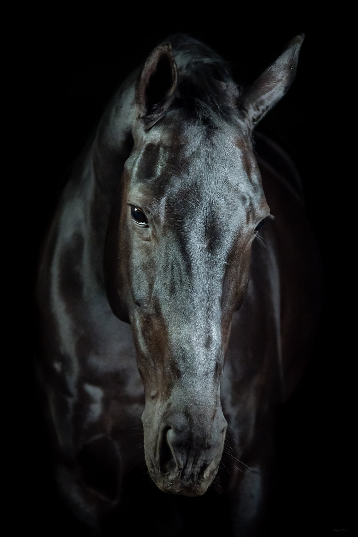 DH_SquareSpace_equus-1482_180110.jpg