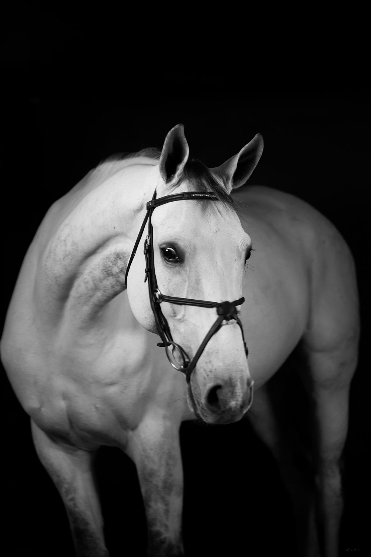 DH_SquareSpace_equus-1537_180110.jpg