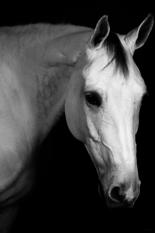 DH_SquareSpace_equus-1738_180110.jpg