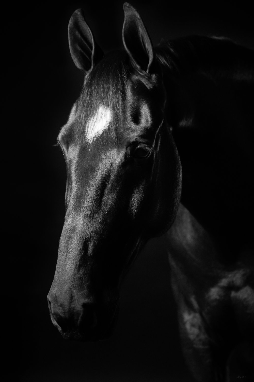 DH_SquareSpace_equus-6285_170104.jpg