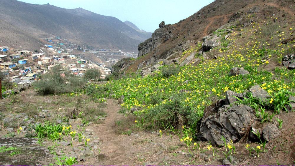 Lomas de Villa María del Triunfo, Lima-Perú (2012)