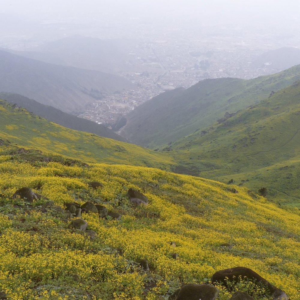 Temporada húmeda en San Juan de Lurigancho 2014.JPG