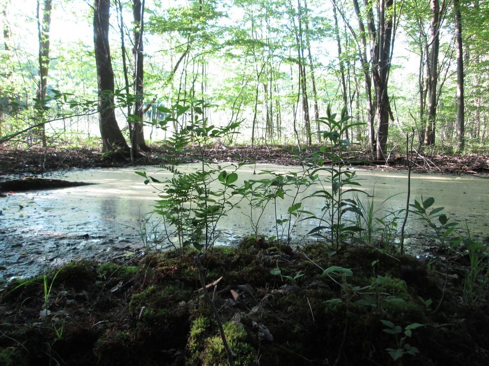 wetland.png