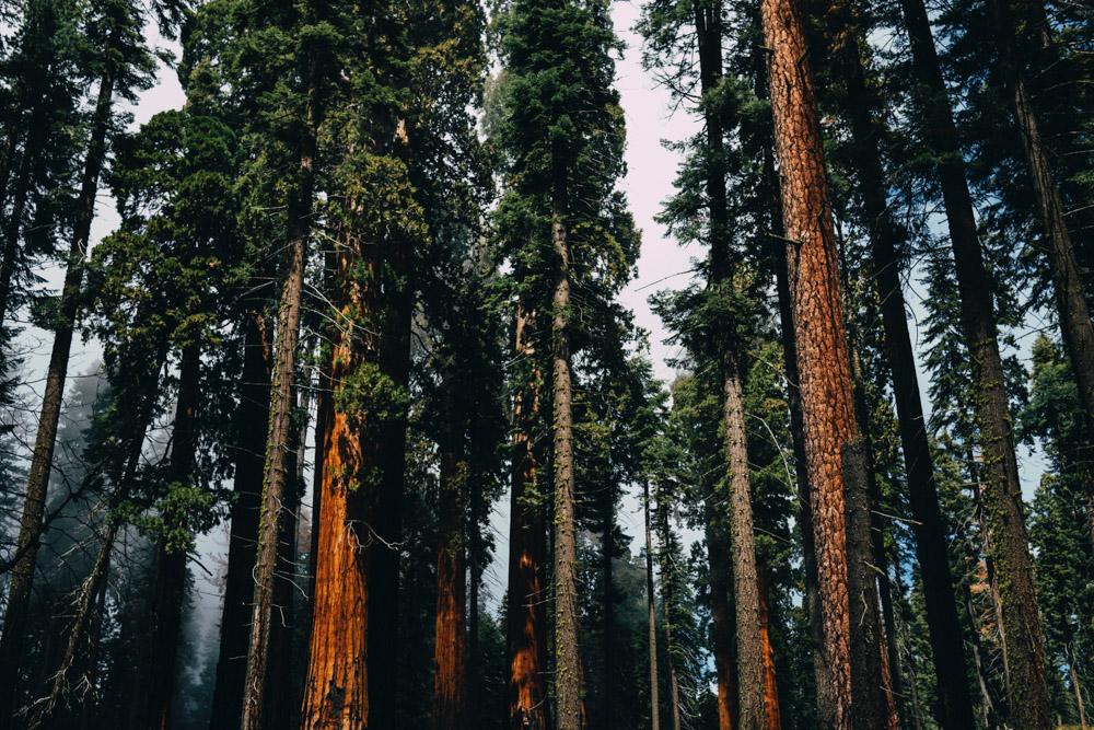 Sequoia_National_Park.jpg