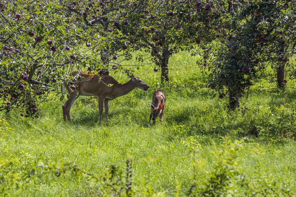 Mother and child grabbing some apples for lunch.