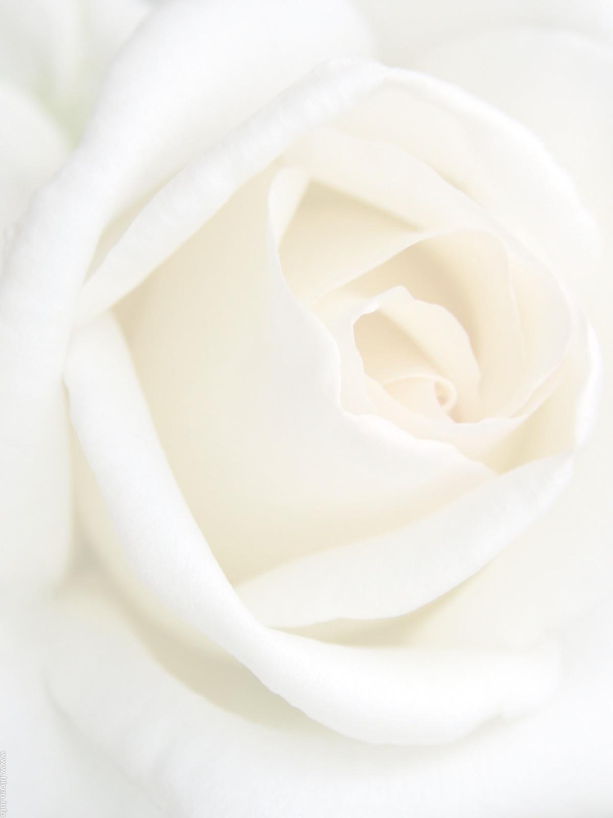 One Love Ceremonies by Angie Jones