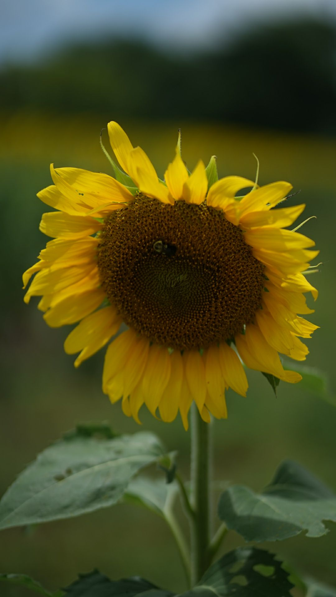 3 Lessons I Learned from a Sunflower