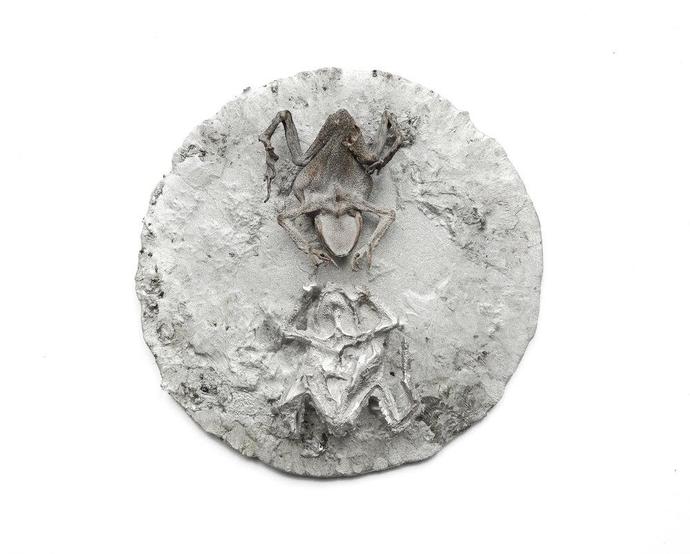 Untitled (alchemical toads), 2018