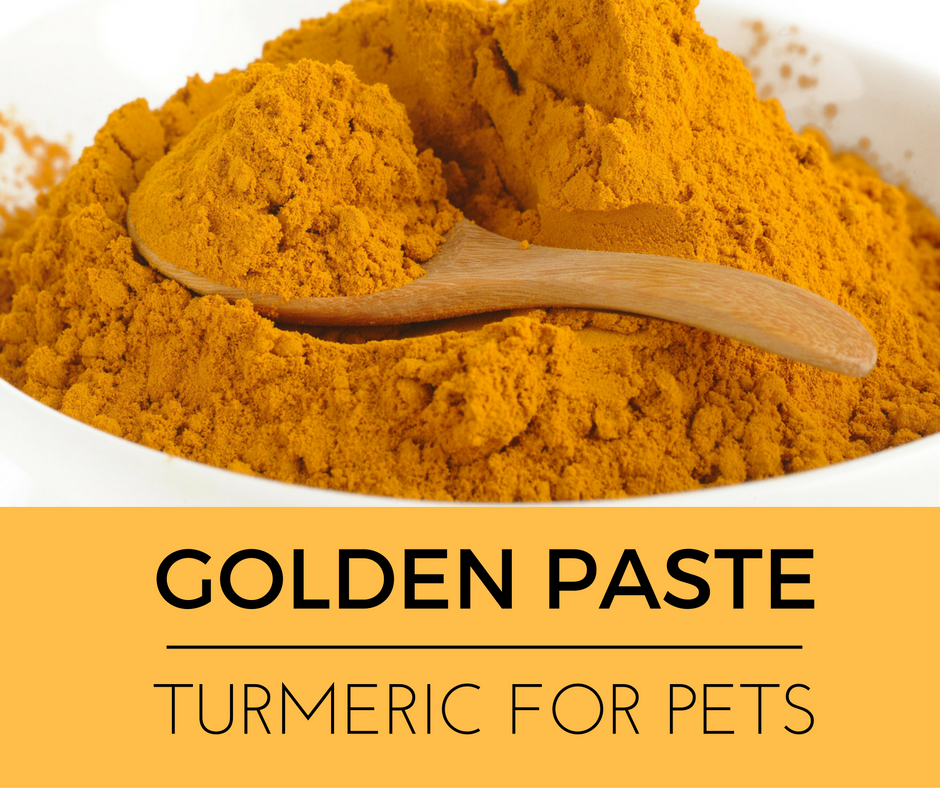 Napa Valley Holistic Veterinary Services-Golden Paste: Turmeric for Pets